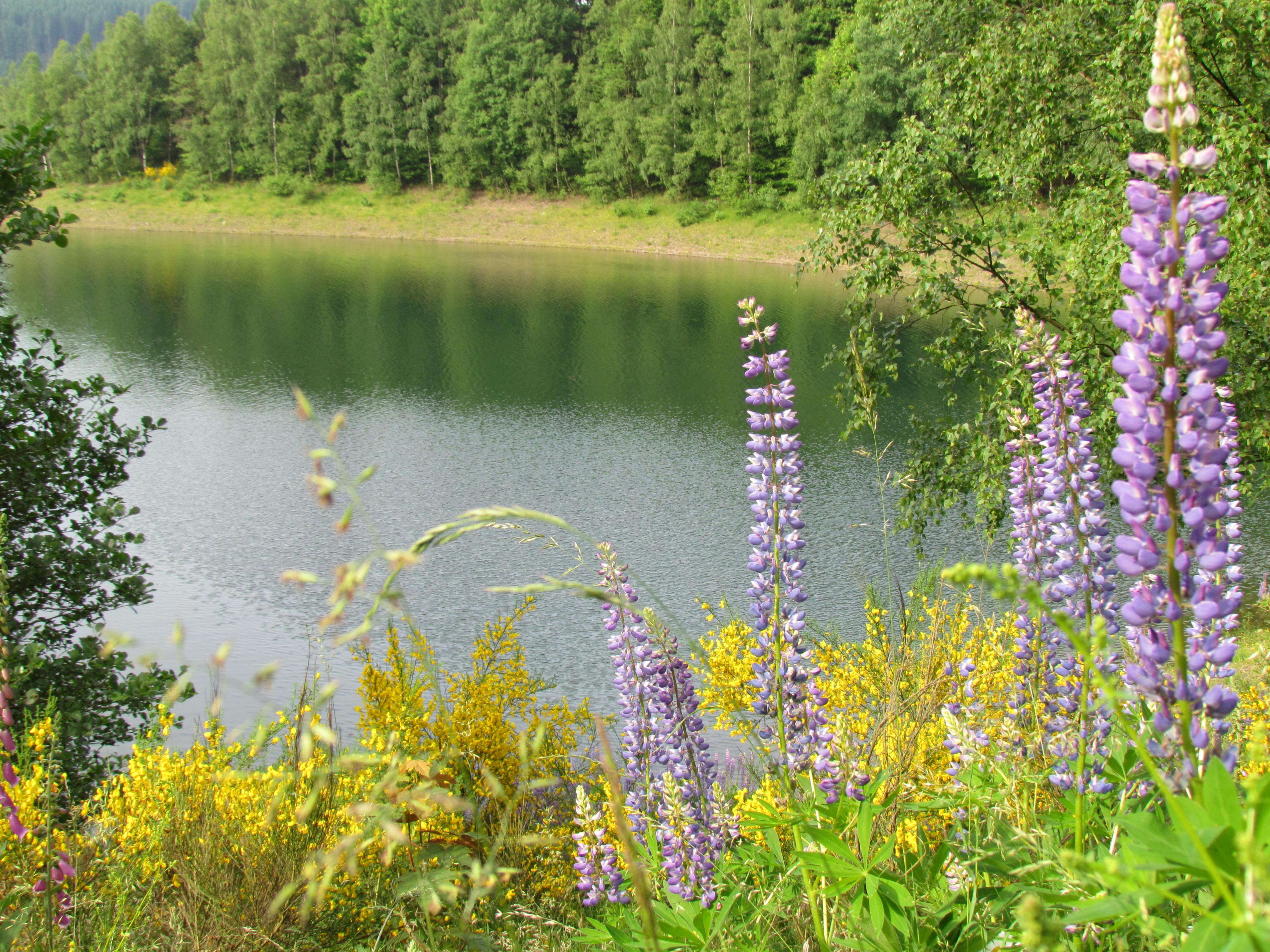 Blumen an der Obernautalsperre